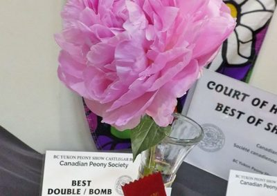 Best Double/Bomb: Dresden Pink, Jim and Carol Adelman, Adelman Peony Gardens, Salem, OR. USA